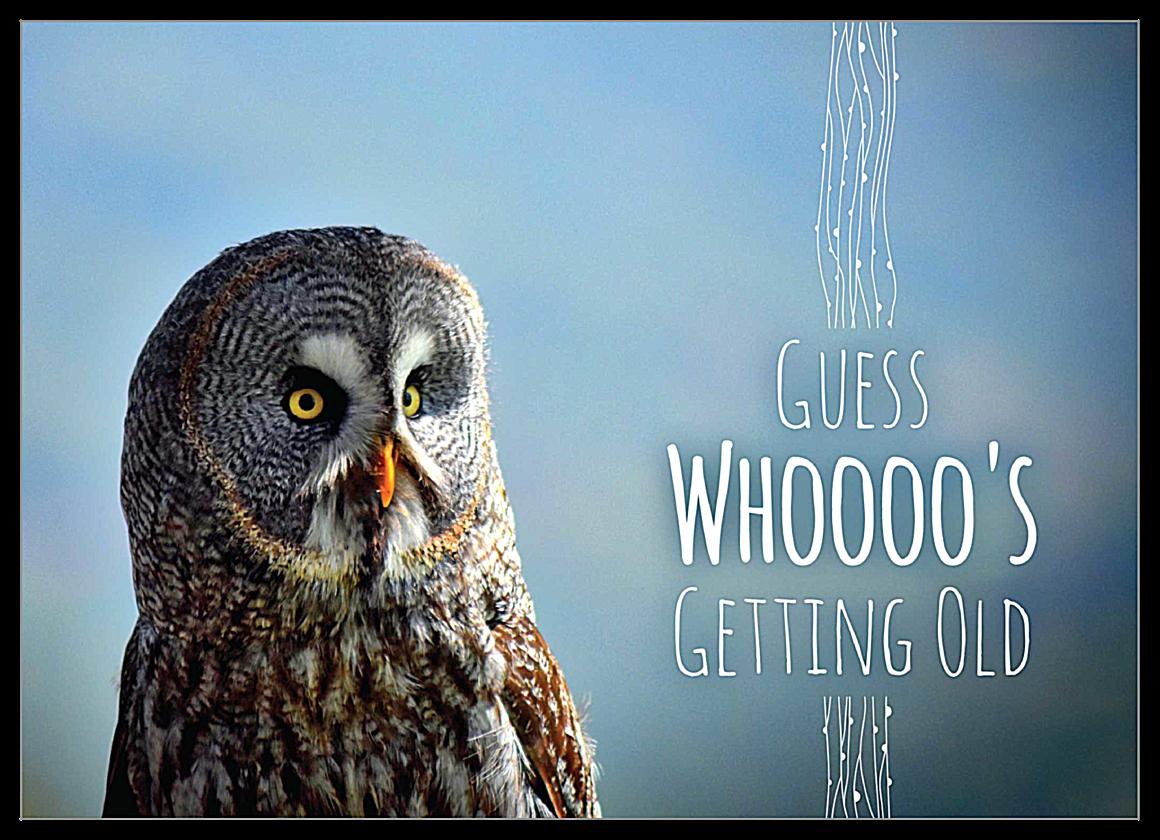 Birthday Owl front - Invitation Cards Maker