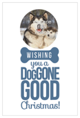 Doggone Christmas - invitation-cards Maker