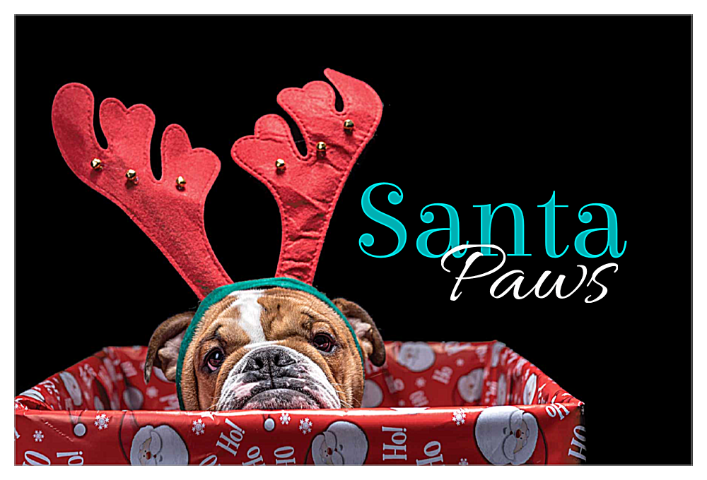 Doggy Antlers front - Invitation Cards Maker