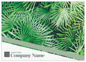 Palm Leaves - ultra-postcards Maker